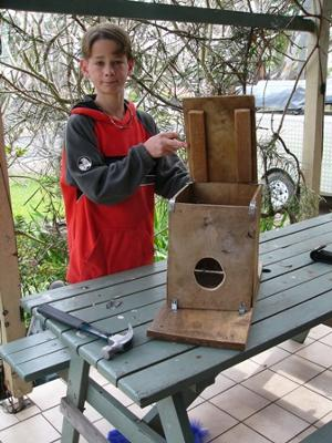 Building a bird box - nature science project idea